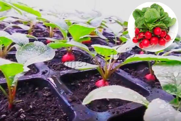 Регулярный полив - важное условие хорошего урожая