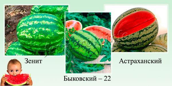 Самые сладкие сорта арбузов