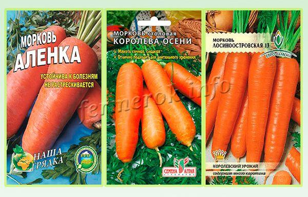 Самые урожайные сорта моркови