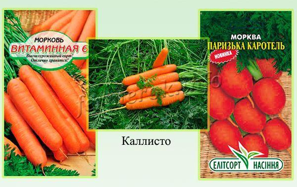 Самые вкусные и полезные сорта моркови