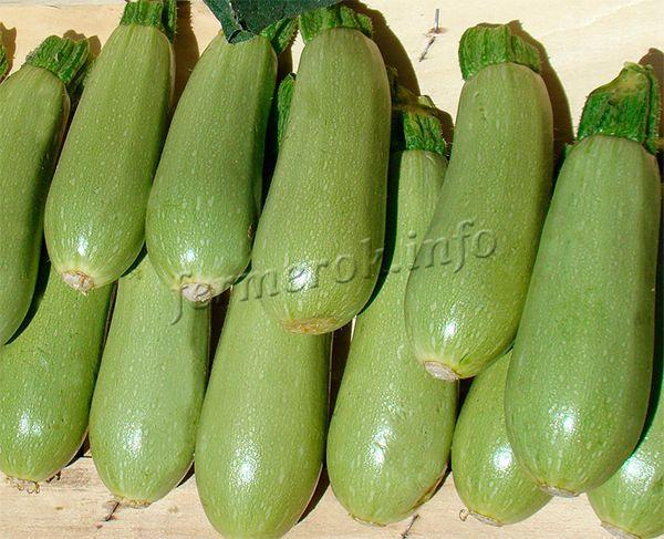 Сбор должен проводиться в сухую погоду, чтобы плоды не были мокрыми от дождя или росы