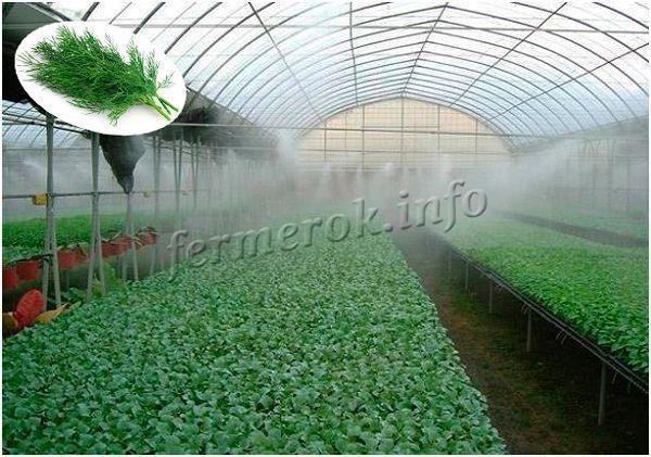 Системы туманообразователей в теплице
