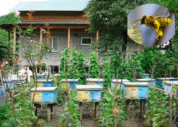 Содержание пчел на приусадебном участке
