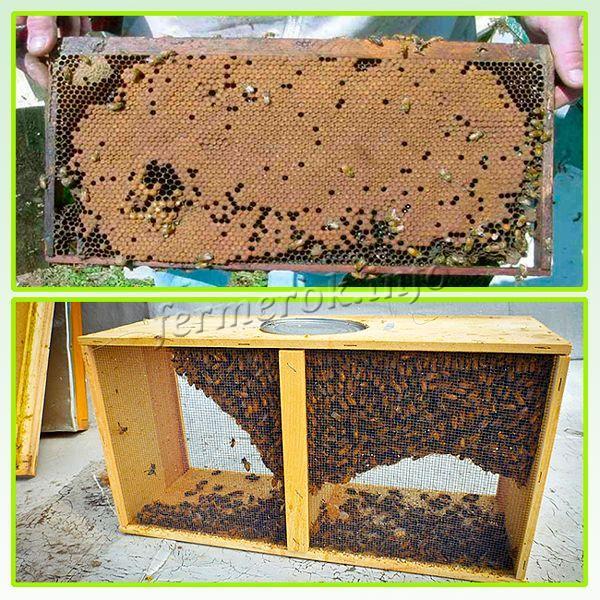 Сотовый и безсотовый пчелопакеты