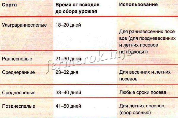 Таблица всходов урожая редиса