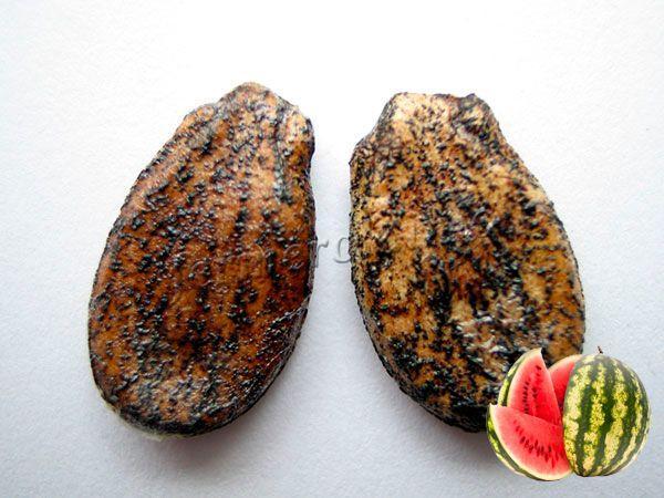 Только хорошие семена годятся для выращивания арбузов в теплицах