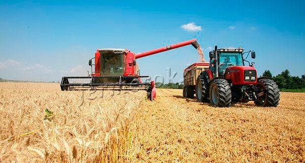 Уборка урожая озимой пшеницы