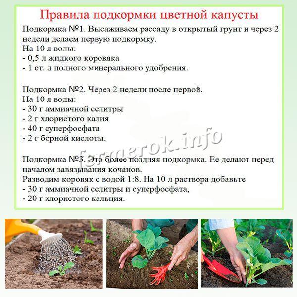 Уход за цветной капустой