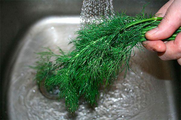 Укроп необходимо промыть проточной водой очень тщательно