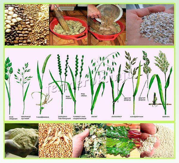 Виды полезных кормов для индюков