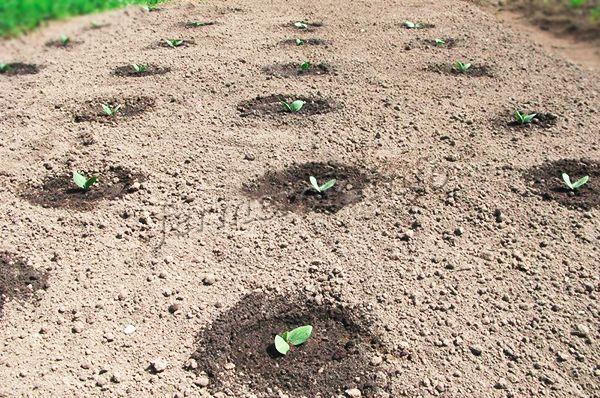 Вначале можно разве что полить, если земля сильно пересохнет и удалить сорняки