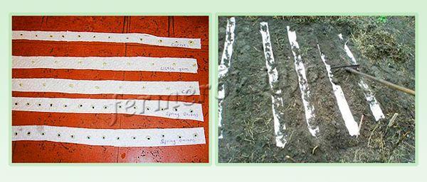 Высаживание семян на бумажной ленте
