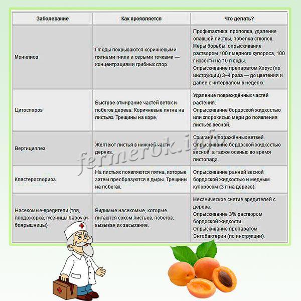 Заболевания абрикос