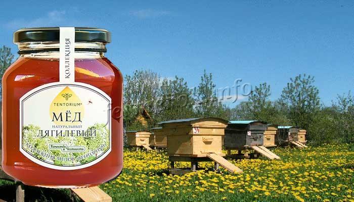 Фото пчелиной пасеки с ульями